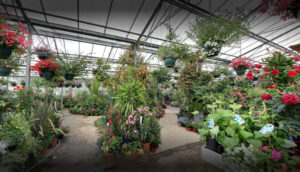 Plantes intérieurs Serres Ballet
