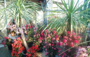 Fleurs / plantes intérieurs