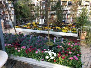jardin-ericballet-galeriephoto-10