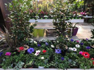 jardin-ericballet-galeriephoto-12