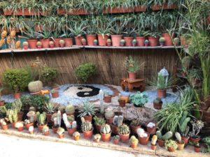 Fleurs / plantes / cactus