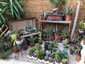Fleurs / plantes /cactus