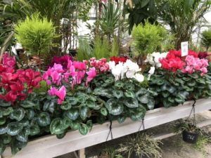 jardin-ericballet-galeriephoto-17
