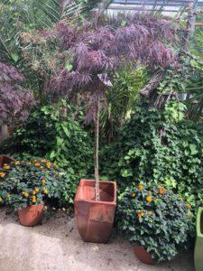 jardin-ericballet-galeriephoto-18