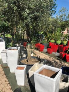 jardin-ericballet-galeriephoto-19