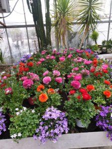 Fleurs / plantes