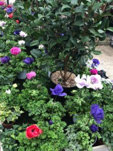 jardin-ericballet-galeriephoto-6