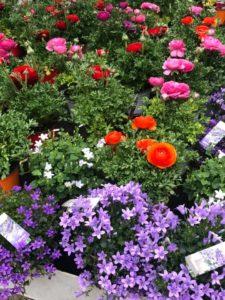 ericballet fleurs