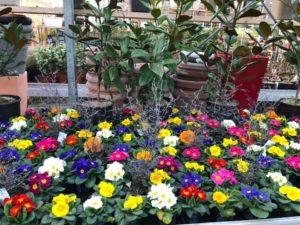 Fleurs multi couleurs Eric Ballet