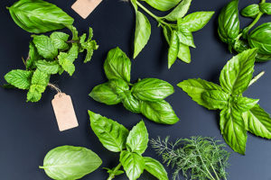 Un large choix de plantes aromatiques