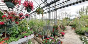 plante_intérieur_jardin_ballet_Besançon