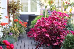 offre-speciale-terrasse