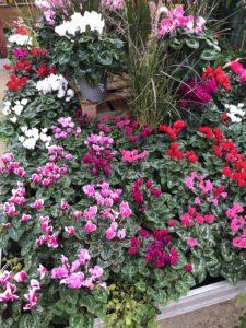 Fleurs espace jardins Eric Ballet