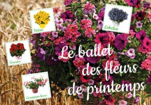 Fleurs / plantes Ballet des fleurs